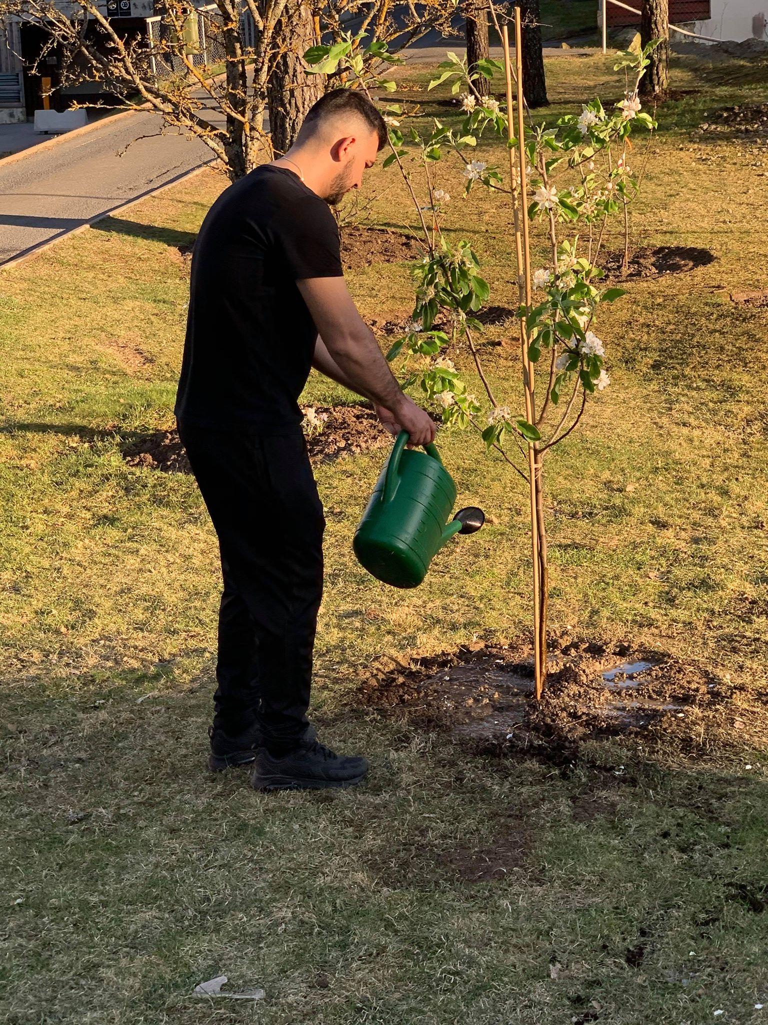 Plant et tre