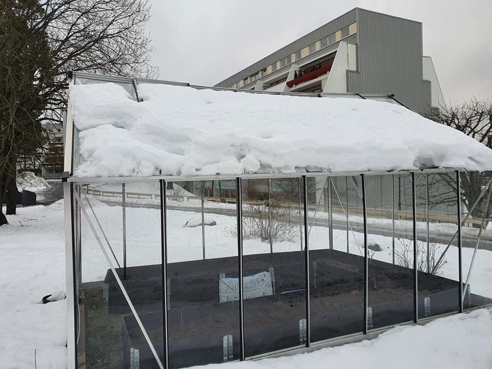 Tynget av snø